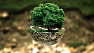 manipulated image of lush green tree growing out of a floating half orb against a blurred background of earth and moss